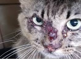 Cat Sporo Kulat Kucing Yang Mungkin Membahayakan Keluarga Anda Klinik Putra